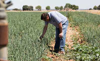Tecnovino nueva PAC Cooperativas Agro alimentarias Castilla La Mancha
