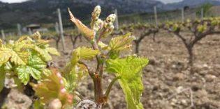 APPVid, la aplicación en la que trabaja Neiker-Tecnalia para predecir el riesgo de enfermedades en viñedos