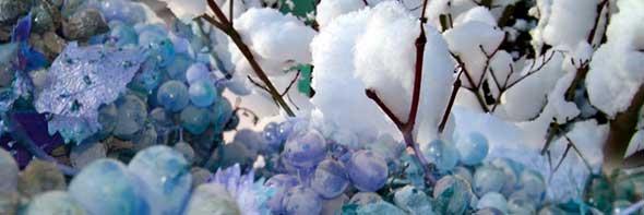 Tecnovino seguro de primavera de uva de vino COAG