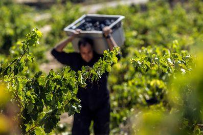 Tecnovino cosecha de Rioja