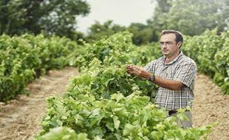 Tecnovino viticultura ecologica