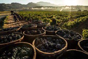 Tecnovino Rioja vendimia