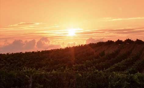 Tecnovino ecosostenibilidad en la actividad vitivinicola Jornada Diam vinedo