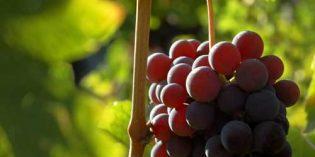 2017, un excelente año para las importaciones mundiales de vino