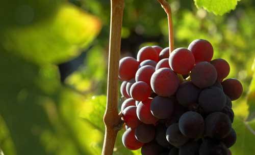 Tecnovino importaciones mundiales de vino