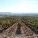 """Bodegas Emilio Moro pone en marcha un sistema de abono """"a la carta"""" de sus viñedos"""