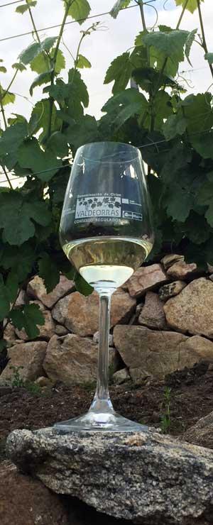 Tecnovino Valdeorras copa de vino