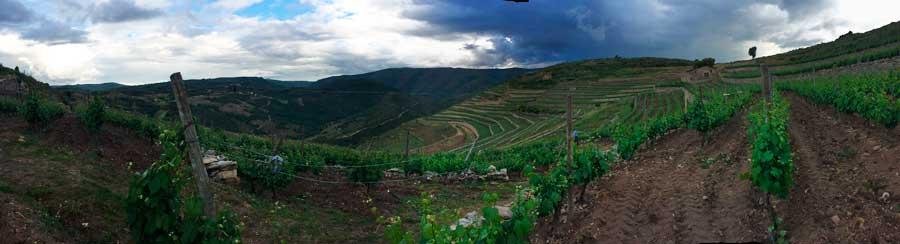 Tecnovino Valdeorras vinedos panoramica