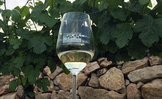 Tecnovino Valdeorras vino