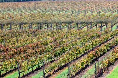 Tecnovino Congreso Mundial de la Vina y el Vino Oiv Uruguay vinedo