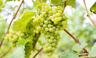 Tecnovino vinos ecologicos