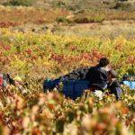 Vive la vendimia con las propuestas enoturísticas de la Ruta del Vino de Rioja Alavesa