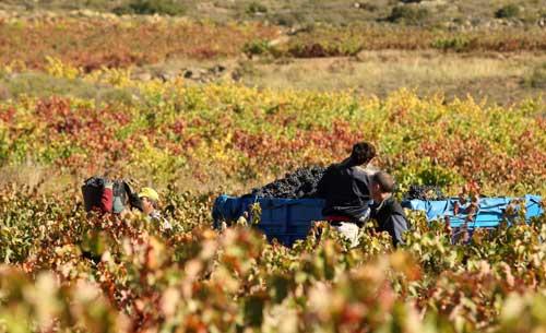 Tecnovino Ruta del Vino de Rioja Alavesa 1