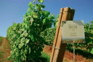 Tecnovino Spain Trough its Wineries