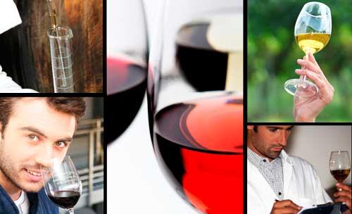 Tecnovino investigacion vitivinicola becas 2