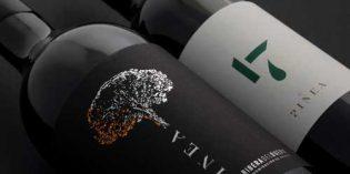 Pinea, la bodega y los vinos soñados por dos mexicanos en Ribera del Duero
