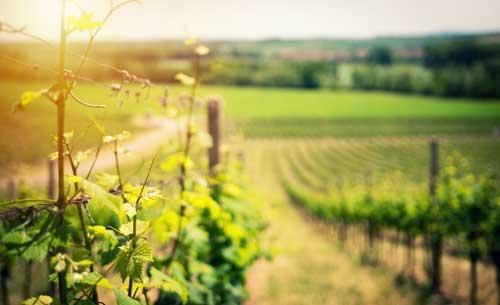 Tecnovino vinos de la anada 2018