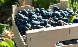 Menos producción y existencias, los datos en España de la campaña vitivinícola 2017/2018