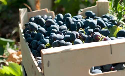 Tecnovino campana vitivinicola