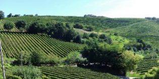 El proyecto Gesviña promueve la viticultura sostenible del viñedo atlántico reduciendo los fitosanitarios