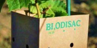 Lo último en tubos protectores para viña: biodegradables y ecológicos