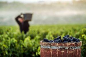 Tecnovino vendimia en la DOCa Rioja