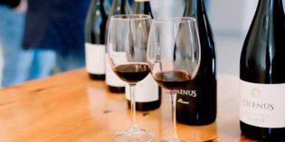 Los vinos de MGWines en El Bierzo y Almansa, Tilenus y Ternario