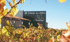 Viñedos de Alfaro incorpora a Antonio Salinas para el nuevo puesto de director comercial