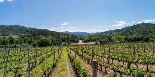 Una aplicación ofrecerá información fitosanitaria sobre el viñedo en toda Galicia, AppFitoVit
