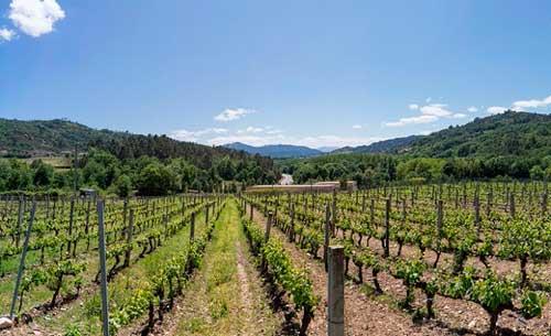 informacion fitosanitaria sobre el viñedo AppFitoVit del Evega