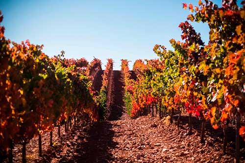 Tecnovino Pago de los Capellanes viticultura de altura Fuentenebro
