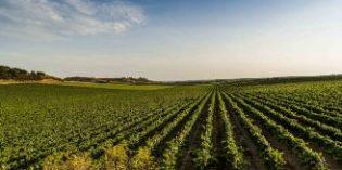 Raimat lidera un proyecto con nuevas tecnologías para ahorrar el 25% del agua de riego en viña