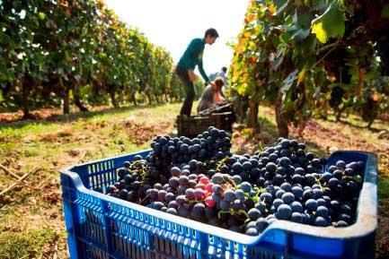 Tecnovino impresion para el sector vitivinicola Toshiba 3