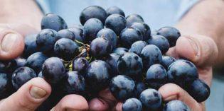 ¿Quieres dedicarte profesionalmente al vino? En marzo arranca el Máster Matarromera en Gestión de Empresas Vitivinícolas