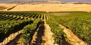 Grupo Príncipe de Viana se embarca en un nuevo proyecto de I+D para una gestión del viñedo más sostenible y eficaz
