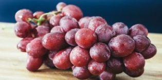 Investigan los efectos antioxidantes de la uva para desarrollar una bebida contra enfermedades neurodegenerativas