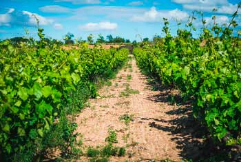 Tecnovino curso introductorio de Master of Wine