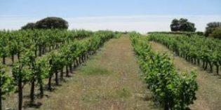 Dehesa de Luna ya es ecológica por completo, sus viñedos y bodega logran la certificación