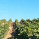 Grupo Marqués de Cáceres entra en Ribera del Duero con su proyecto Finca La Capilla