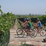 Curso experto en marketing del vino, enoturismo y gastronomía, en la localidad de Laguardia