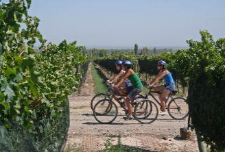 Tecnovino curso experto en marketing del vino