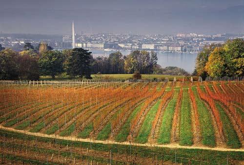 Tecnovino 42 congreso mundial de la vina y del vino de oiv Suiza