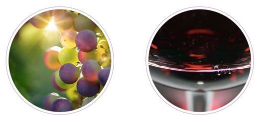 Tecnovino Organic Food Iberia feria vinos ecologicos