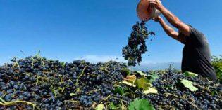 Se publica el contrato tipo de compraventa de uva para su transformación en vino