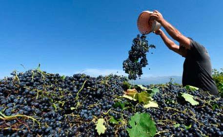 Tecnovino contrato compraventa de uva