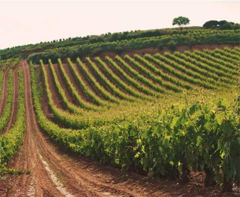 Tecnovino formacion en vitivinicultura Bodegas Riojanas 2