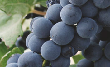 Tecnovino formacion en vitivinicultura Bodegas Riojanas detalle