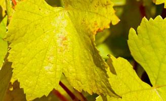 Nuevo récord de la producción mundial de vino en 2018