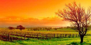Ligero incremento de la superficie de viñedo en España en 2018