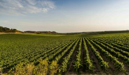 Tecnovino Wineries for Climate Protection